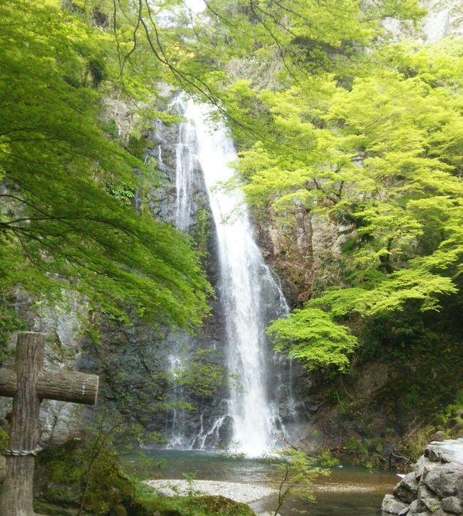 大阪の北部箕面は、大阪市内から車で40分くらいのエリア。<br />半日で、山登り気分が味わえて、自然を満喫できるオススメスポットです。<br /><br />箕面と言えば、勝運の寺・勝尾寺や箕面の滝が有名ですが、その周辺には、ハイキングコースがいくつもあります。<br /><br />今回は、初めての山歩きをする2歳時、思いっきり自然探検したい7歳少年、普段歩かない父母(中年…)の4人家族で楽しめたコースをご紹介します。<br /><br />なんといっても見所は、新緑!!<br />マイナスイオンが写真から伝わればよいのですが〜。