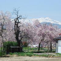 喜多方「しだれ桜散歩道」を訪ねて(福島)