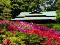 皇居 二の丸庭園 春 盛り つつじ咲く 下