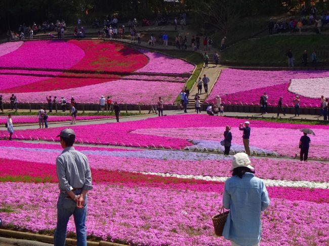 今回宿泊したのは長瀞駅から至近のお宿です。<br /><br />長瀞にあるだけに、その名も長い「長瀞 花のおもてなし 長生館 」ですが、確かに長瀞の雄大な風景と花が美しい旅館でした。<br /><br />その長瀞の宿でまったりした翌日は有名な羊山公園で芝桜を鑑賞しました。<br /><br />余りにも色彩鮮やかにしてコントラストの強い丘の風景に圧倒されました。