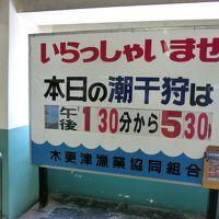 たぬきのまち 木更津で潮干狩り