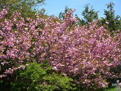 春の佐渡紀行と日蓮宗三大本山巡り、でも朱鷺を見ないで金山見学だけは・・・ 1