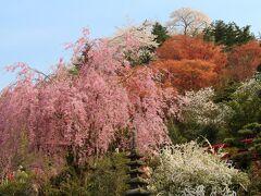 春爛漫!三春滝桜&花見山でお花見