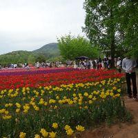 世羅高原花盛り
