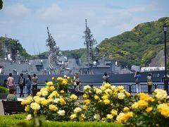 横須賀ヴェルニー公園のバラ撮影の予定が小田原御感の藤撮影に化けた+寺院巡り