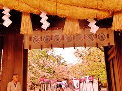 三島1/2 三嶋大社に参拝 さくら花は見納め ☆金木犀の巨木があり