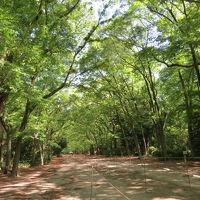 伏見・藤森神社駈馬神事、最大の見せ場が見えない~。