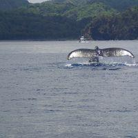 歴史と豊かな自然を内包する父島の海と山