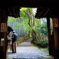 新緑の京都第2弾...東海自然歩道を歩いての古社寺巡り☆