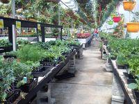 バンクーバー近郊の町 4、野菜の苗を買いに郊外のナーサリーへ