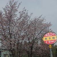 2015GW:和寒・剣淵お花見サイクリングの旅