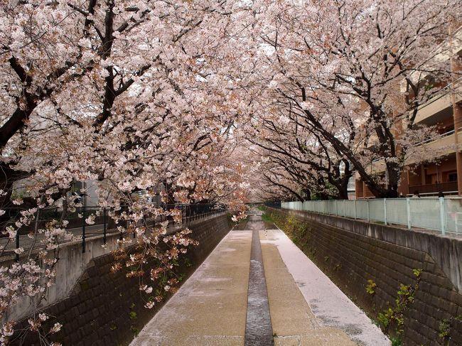 毎年恒例の麻生川の花見(&焼き肉)。<br />今年は4/4(土)に行きましたが、既に散っていました。<br />一週前は、3分咲きくらいだったのに…<br /><br />天気も曇りで少し寂しい花見になりました。<br /><br /><br /><br />※麻生川:主に神奈川県川崎市麻生区を流れる河川。鶴見川水系の支流。<br />     小田急小田原線の新百合ヶ丘駅〜柿生駅間とほぼ並行して流れる     地域の沿岸1.1kmに渡って桜並木がある。<br /><br /><br /><br /><br /><br />《使用カメラ》<br /> OLYMPUS PEN E-P5 (ミラーレス一眼 2014年購入) <br /> LUMIX DMC-GF5WA (ミラーレス一眼 2014年購入) <br /> iPhone5s (2013年購入)