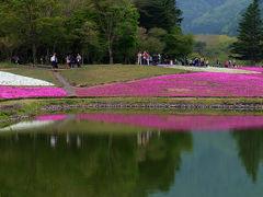雨が降りそう それでも見たい 富士芝桜まつり 上