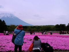 雨が降りそう それでも見たい 富士芝桜まつり 下