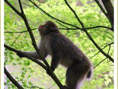 Solitary Journey [1574] 高さ110m幅20mの断崖絶壁を落下する豪快な滝。お猿さんと遭遇~。<神庭の滝・ガンダムの里>岡山県真庭市