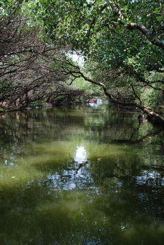 很喜歡臺灣! バニラで台南行って来た⑤ 四草生態文化園区で緑色隧道竹筏篇