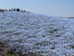 青い空と青い大地~ネモフィラの丘に立つ