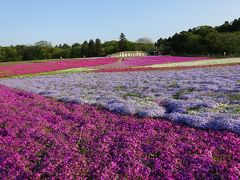 富津で貝焼き・荒天のお台場・千葉の芝桜!