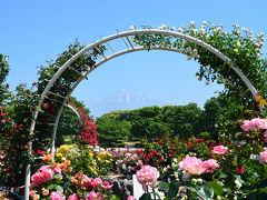 中央公園の薔薇 2015.05.14