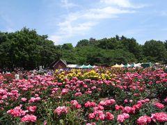 与野公園ばらまつり2015