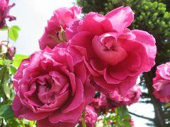 '15 春バラが見頃の京成バラ園へ1