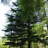 5月の軽井沢は・・・・ 新緑の森、野鳥の森、そしてホテル『鹿島ノ森』 がいいですね!