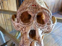 ボルネオ2015・・・(3)首狩り族の勇者モンソピアと42個の頭蓋骨