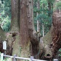 隠岐の島 ローソク島遊覧とまるごと全4島(03) かぶら杉