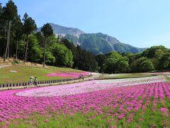 2014 MAY 秩父の芝桜 見ごろ終盤だけど充分楽しめた