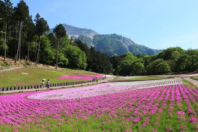 【表紙の写真】秩父 羊山公園の芝桜 奥に武甲山を望む<br /><br />池袋からの日帰りで、「芝桜の丘+いちご狩り」の旅<br /><br /><br />↓公式WEB<br />http://navi.city.chichibu.lg.jp/p_flower/1808/
