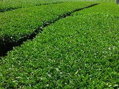 薫風そよぐ茶畑へ。素晴らしい景色の【あいの土山マラソンコース】(日本陸連公認)