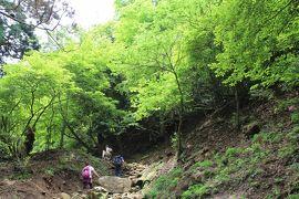 新緑の大山ハイキング