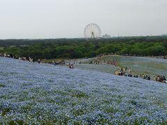 青いじゅうたん!
