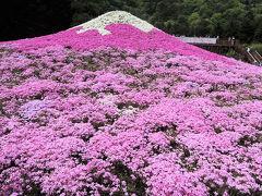 富士芝桜まつり2014(前編)