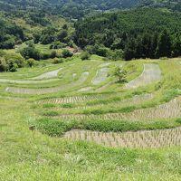ワンコと一緒にしぶごえ千倉に宿泊。観光は大山千枚田と養老渓谷へ。