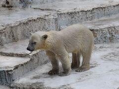 気ままな休日を天王寺動物園で。 【週末大阪旅】
