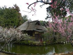 やっぱり観梅は『梅宮大社』でしょう!◆ガブちゃん&shimaさんと行く京都の観梅ツアー≪その3≫
