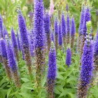 河内長野「花の文化園」、6月は蓮の花・アジサイ・ササユリが綺麗です!