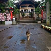 富士山と猫と不思議の島
