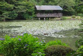2015梅雨、尾張・三河の紫陽花巡り:東山植物園(1/4):額アジサイ、山アジサイ、アマチャ
