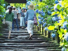- Blue - あじさいの明月院・花の寺東慶寺    2015.6.15