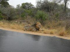 還暦夫婦 南アフリカツアー 早朝サファリ