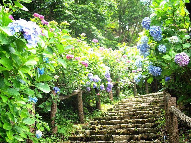毎年6月は誕生日旅行。<br /><br />今回は1泊2日で伊豆稲取温泉へ。<br /><br />決め手は、あじさいと蛍!<br /><br />初めて見た蛍は幻想的で感動。<br /><br />翌日は下田まで移動してあじさい祭に行ってきました。<br /><br />海外も好きだけど、季節を楽しめる日本も素敵?