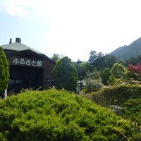 近江富士花緑公園のシャクナゲ