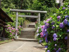 紫陽花:北鎌倉の明月院・東慶寺(鎌倉三十三観音30,32)・今泉白山神社、そのまま歩いて大船へ