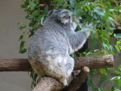 2015梅雨、東山動植物園(1/10):動物園:インドサイ、象、コアラ、シマウマ、フラミンゴ
