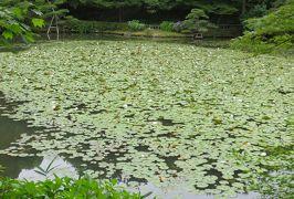2015梅雨、東山動植物園(8/10):植物園:也有園