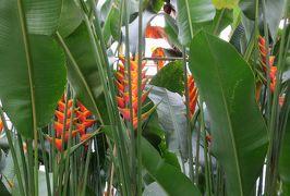 2015梅雨、東山動植物園(9/10):植物園:也有園、茶室、温室