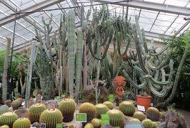 2015梅雨、東山動植物園(10/10):植物園:温室