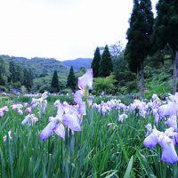 播州山崎花菖蒲園から玉水ゆり園へ!